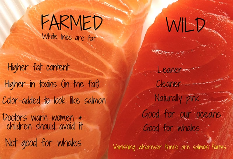 Wild-Salmon vs farmed